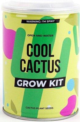 Cactus grow kit Gift republic